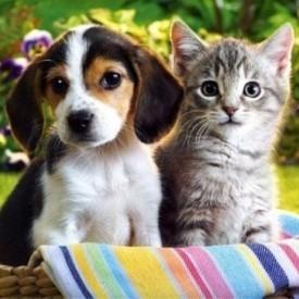 Προϊόντα Σκύλου/Γάτας