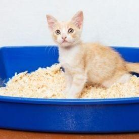 Τουαλέτες & Λεκάνες Γάτας
